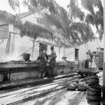 Выловленный тунец на фабрике в Tavira, Algarve, 1944-1946. Фото AML