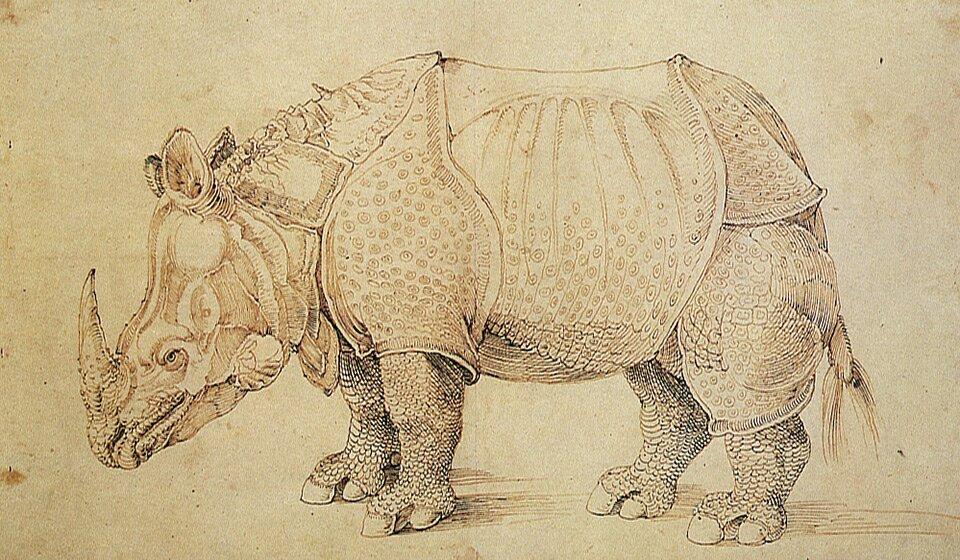 Лиссабонский носорог